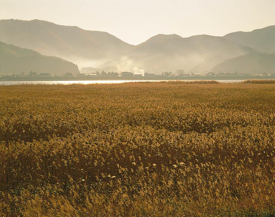 北上川ヨシ原